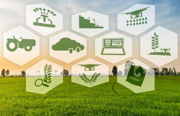 How AI Can Enhance The Agriculture Industry Around The World
