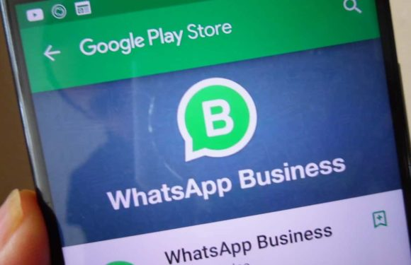 WhatsApp Business API Guide / How to Get Started
